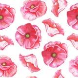 Безшовная картина цветков тюльпанов Стоковое Изображение