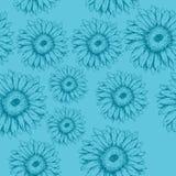 Безшовная картина цветков gerbera на голубой предпосылке Стоковые Фото