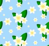 Безшовная картина цветков plumeria Стоковое Изображение RF