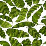 Безшовная картина экзотических, ярких ых-зелен листьев банана, случайно разбрасываемых и изолируемых на прозрачной предпосылке иллюстрация вектора