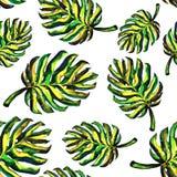 Безшовная картина monstera листьев Иллюстрация вектора