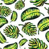 Безшовная картина monstera листьев Иллюстрация штока