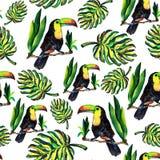 Безшовная картина monstera и Toucan листьев Иллюстрация штока