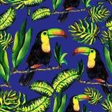 Безшовная картина monstera и Toucan листьев Иллюстрация вектора