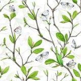 Безшовная картина, weave разветвляет с зеленой листвой и белыми бабочками Стоковое Изображение