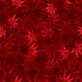 Безшовная красная картина кленовых листов Стоковые Фото