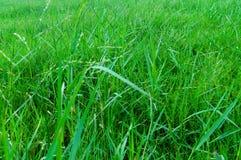 Безшовная красочная поверхность зеленой травы стоковые фотографии rf