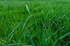 Безшовная красочная поверхность зеленой травы стоковое изображение