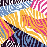 Безшовная красочная текстура шкуры зебры Стоковая Фотография