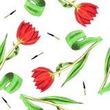Безшовная нарисованная вручную картина с тюльпанами Стоковые Фотографии RF
