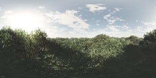 Безшовная панорама неба 360 и ландшафта леса иллюстрация штока