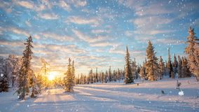 Безшовная петля - снег падая на ландшафт зимы на заходе солнца, Saariselka, Лапландия Финляндия, видео HD видеоматериал