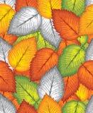 Безшовная предпосылка листьев Стоковая Фотография RF