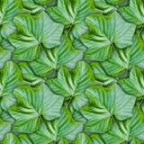 Безшовная предпосылка от зеленых листьев Стоковое Изображение