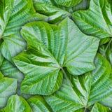 Безшовная предпосылка от зеленых листьев Стоковая Фотография RF
