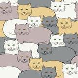 Безшовная предпосылка с великобританскими котами Стоковые Фотографии RF