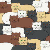 Безшовная предпосылка с великобританскими котами Стоковое Фото