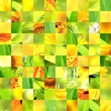 Безшовная предпосылка с картинами солнцецвета Стоковые Изображения