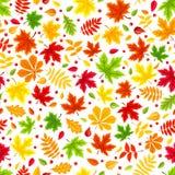 Безшовная предпосылка с красочными листьями осени на белизне также вектор иллюстрации притяжки corel Стоковые Изображения