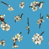 Безшовная предпосылка цветков Яблока Иллюстрация вектора