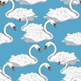 Безшовная птица лебедя картины белых заплывов Vector иллюстрация Стоковая Фотография RF
