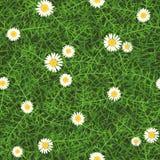 Безшовная текстура вектора зеленой травы луга с маргаритками Стоковые Изображения RF