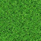 Безшовная текстура вектора свежей зеленой травы на лужайке Стоковая Фотография
