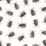 Безшовная текстура - жук Колорадо на белизне Стоковые Изображения RF