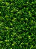 Безшовная текстура зеленых листьев Стоковые Изображения RF