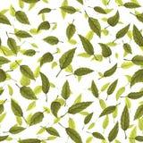 Безшовная текстура зеленых листьев Стоковое фото RF