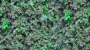Безшовная текстура листвы Стоковое Фото