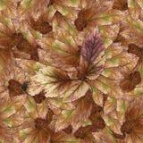 Безшовная текстура картины предпосылки каменных листьев ягоды установила 1 Стоковые Фотографии RF