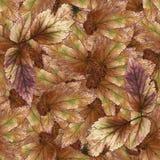 Безшовная текстура картины предпосылки каменных листьев ягоды установила 1 Стоковые Изображения