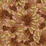 Безшовная текстура картины предпосылки каменных листьев ягоды установила 1 Стоковые Изображения RF