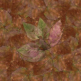 Безшовная текстура картины предпосылки каменных листьев ягоды установила 1 Стоковое фото RF