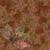Безшовная текстура картины предпосылки каменных листьев ягоды установила 1 Стоковая Фотография RF