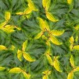 Безшовная текстура картины предпосылки огромных листьев тополя Стоковые Фото