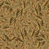 Безшовная текстура картины предпосылки огромных листьев тополя Стоковое Изображение