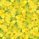 Безшовная текстура картины предпосылки огромных листьев тополя Стоковое Фото