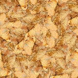Безшовная текстура картины предпосылки огромных листьев тополя Стоковое фото RF