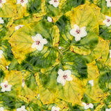 Безшовная текстура картины предпосылки огромных листьев wi тополя Стоковые Фото