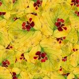 Безшовная текстура картины предпосылки огромных листьев wi тополя Стоковое Фото
