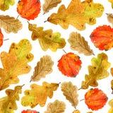 Безшовная текстура листьев дуба и осины падения акварели Яркая печать осени с естественными элементами стоковые фото
