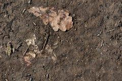 Безшовная текстура почвы и грязи Стоковая Фотография RF