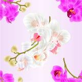 Безшовная текстура разветвляет цветки орхидей белые и фиолетовый вектор стержней и бутонов тропического завода фаленопсиса винтаж Стоковое фото RF