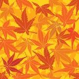 Безшовная текстура с кленовыми листами осени Стоковая Фотография