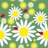Безшовная текстура с маргаритками и ladybug бесплатная иллюстрация