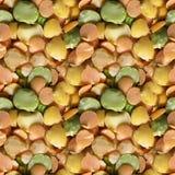 Безшовная текстура фото фасолей гороха Стоковая Фотография RF