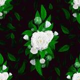 Безшовная текстура цветков на черной предпосылке Стоковые Фотографии RF