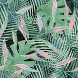 Безшовная тропическая безшовная картина Стоковая Фотография RF